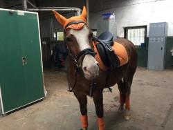 Pferde und Hunde Bumblebee in Orange