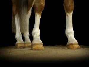 Pferde und Hunde Fotografien