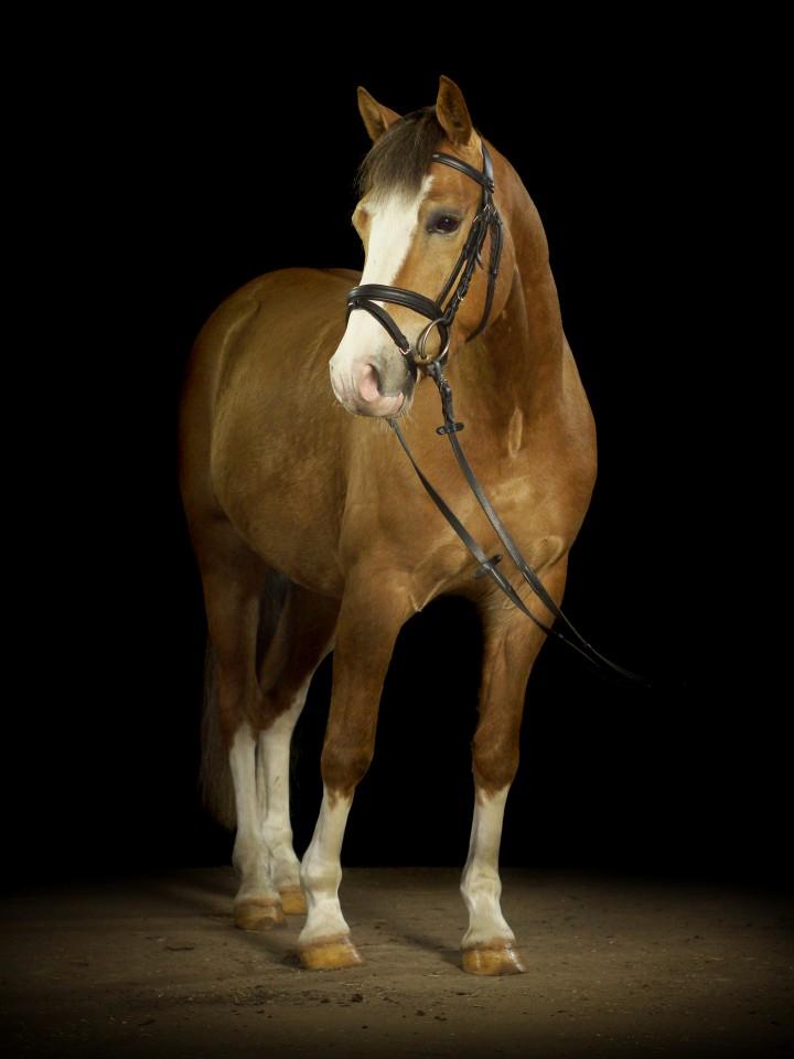 Pferdefotografie vom Profi: Ein Ganzkörperbild