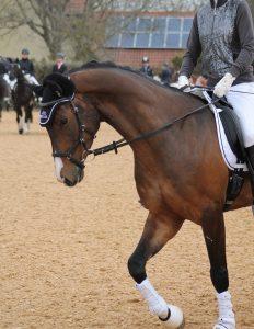 Louisas Pferd mit MIcklem