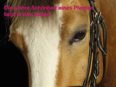 Die 100 Schönsten Pferdesprüche Pferde Und Hunde
